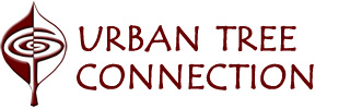 Urban Tree Connection home page